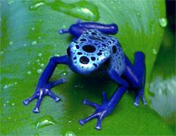 FrogRepell.jpg