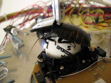 CockRoachRobot.jpg