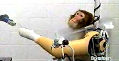 monkeyrobot.jpg