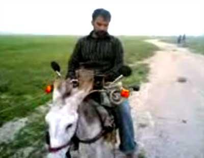 pimp_my_donkey.jpg