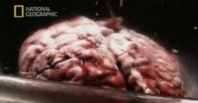 einstein_brain.jpg