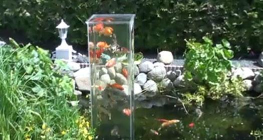 Fish Elevator - Koi Fish Skyscraper In a Koi Pond