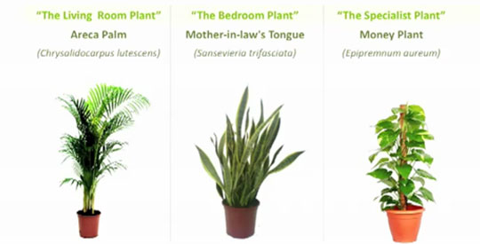 oxygen plants pictures to pin on pinterest pinsdaddy