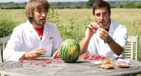 Rubber Bands VS Watermelon