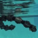 snake-robot-swim