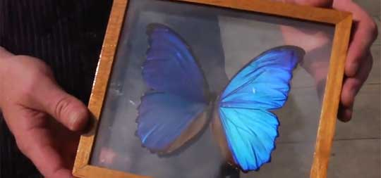 Structural Colour, Soap Films, & Nanotech Security From Butterflies