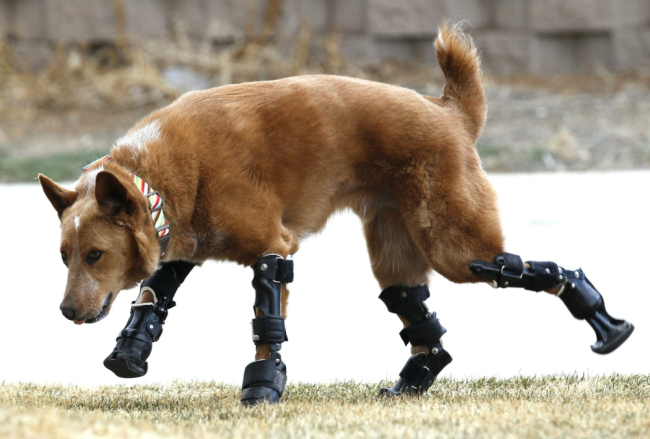 Naki'o The Bionic Dog