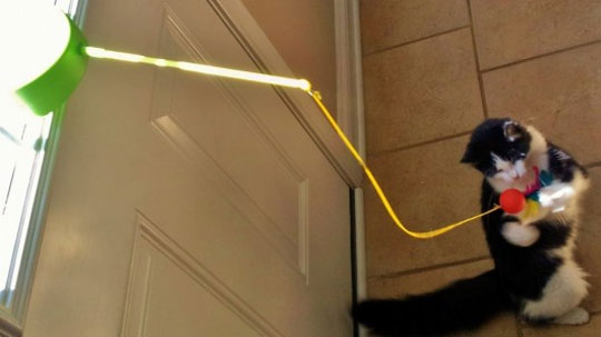 Solar Cat Toy Will Make Your Cat Play Until It Stops Breathing