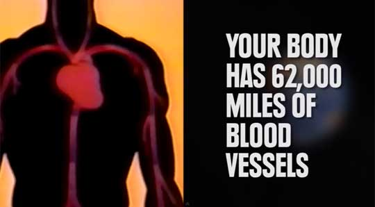 Your Body vs The World In 68 Seconds
