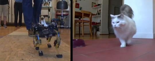 Robot That Runs Like a Cat