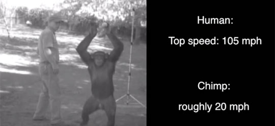 Why Chimps Can't Throw As Good As Humans
