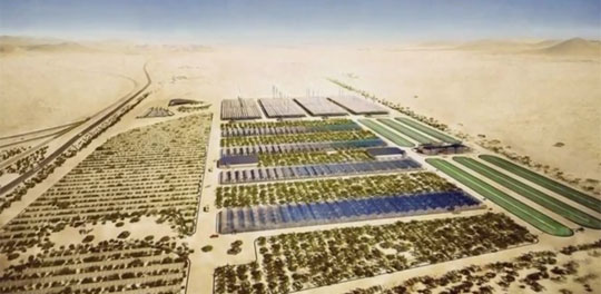Turning the Desert in Qatar Green