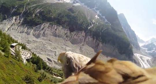 Someone Strapped a Camera to The Back of an Eagle