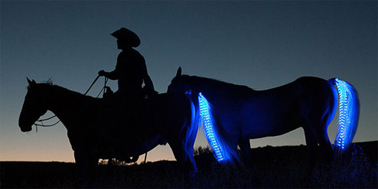 LED Tail Lights for Horses