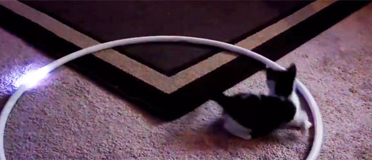 LED Hula Hoop + Cat=Torture Device