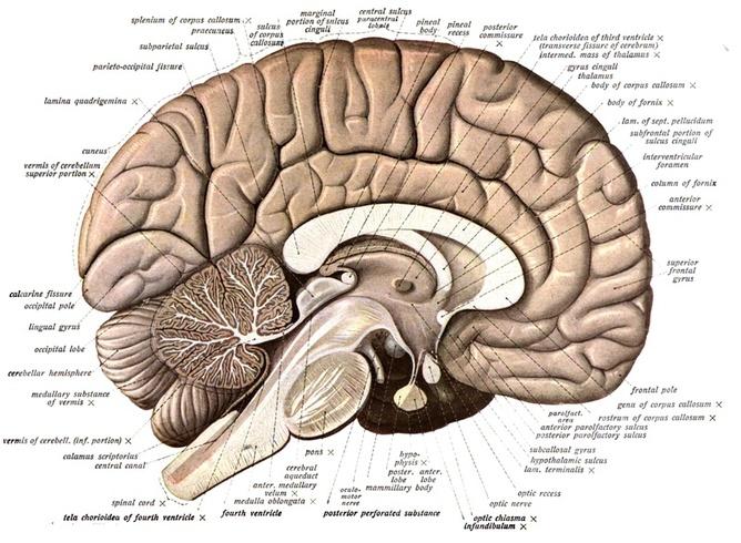Brain memory storing