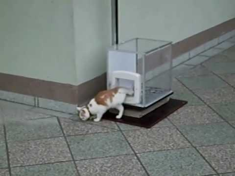 The Cat-Lift, fully operated by the cat