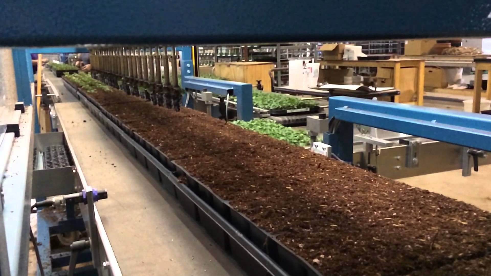 Watch How a Pack Planter Robot Transplant Pansies