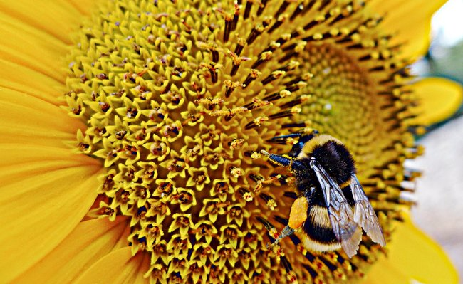 Which Came First - Flowers or Bees?