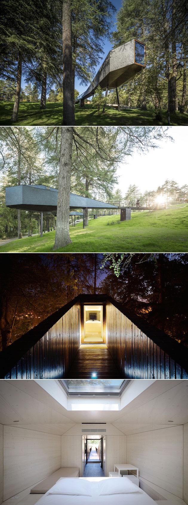 tree-snake-house2