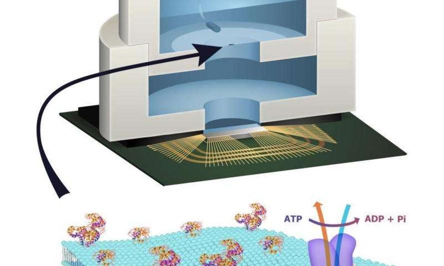 biology-computer-chip1