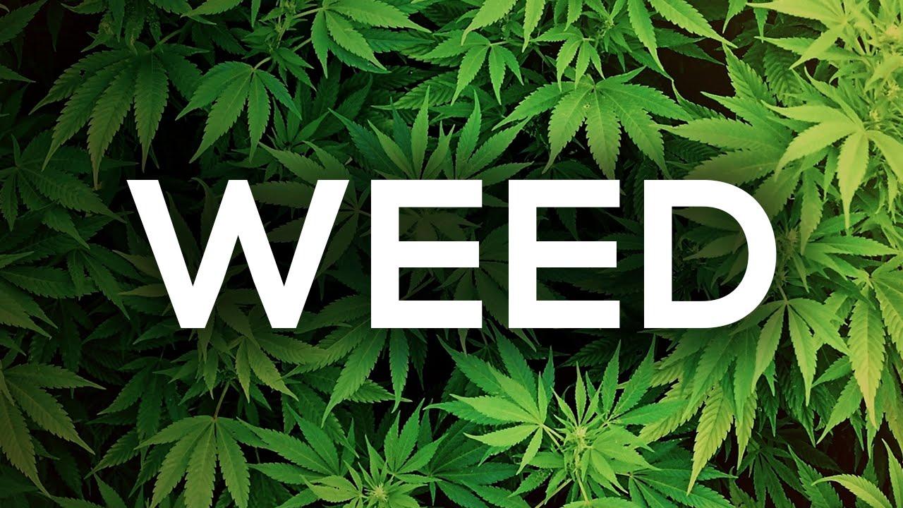 The Science Behind Marijuana