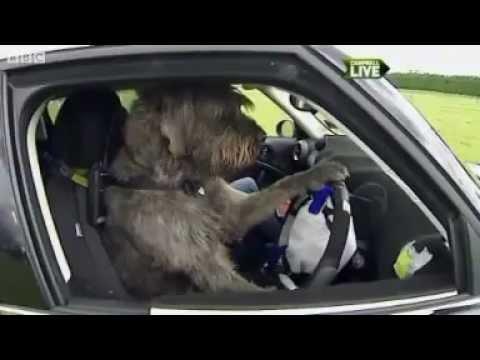 Driving School for Dogs - Not a Joke!
