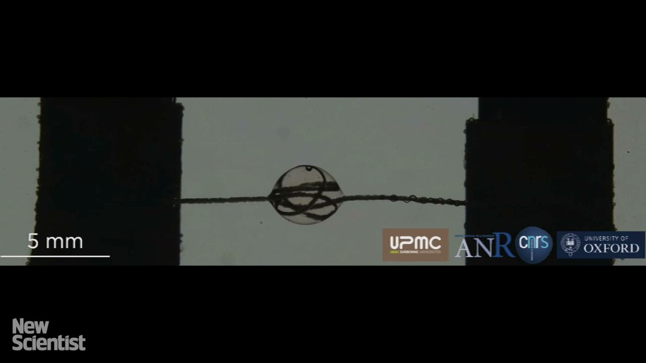 Artificial spider silk behaves like a solid and a liquid