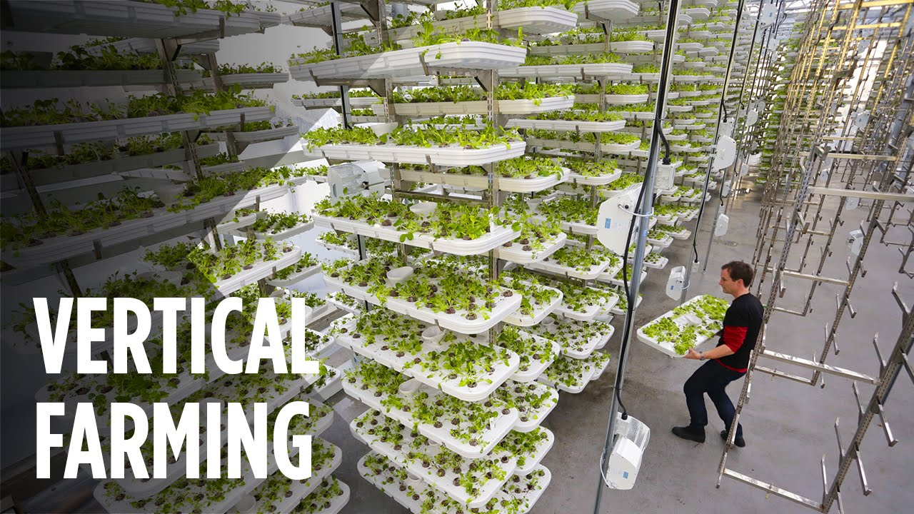 These Vertical Farms Use No Soil and 95% Less Water