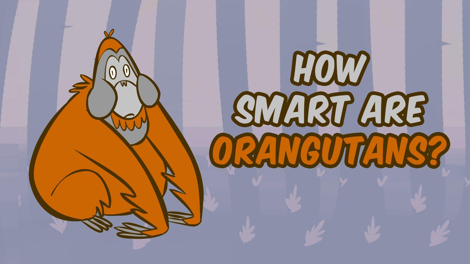 How smart are orangutans?