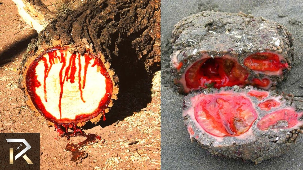 10 Cursed Objects We Can't Explain Yet