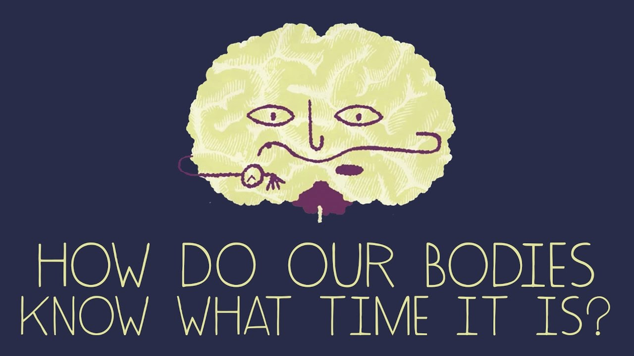 How does your body know what time it is?