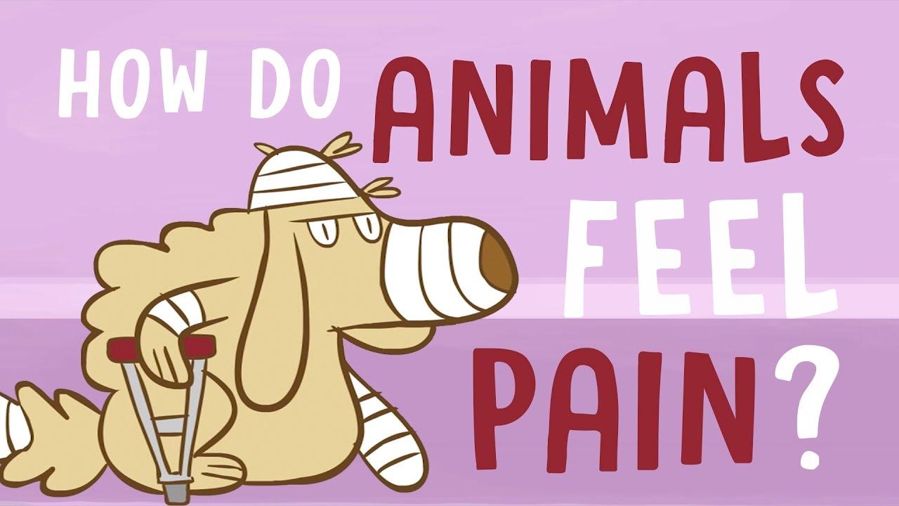 How do animals experience pain?