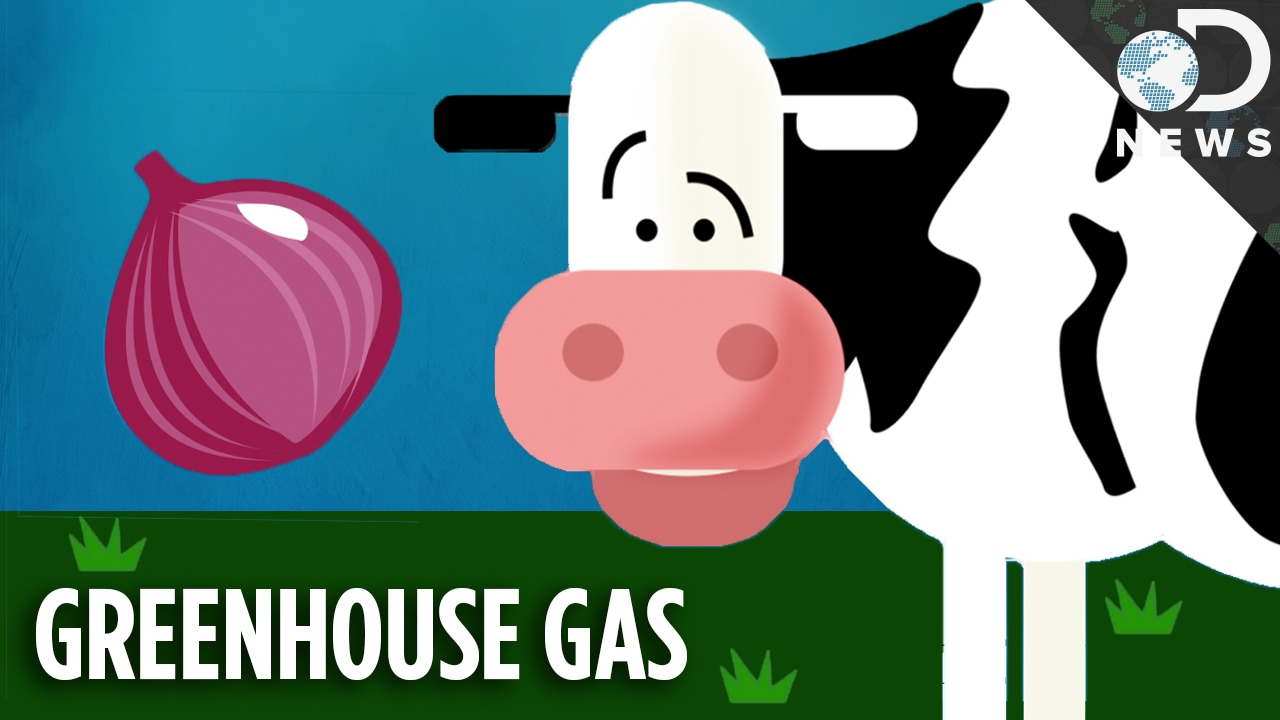 Onions Could Stop Cows From Farting The Planet To Death