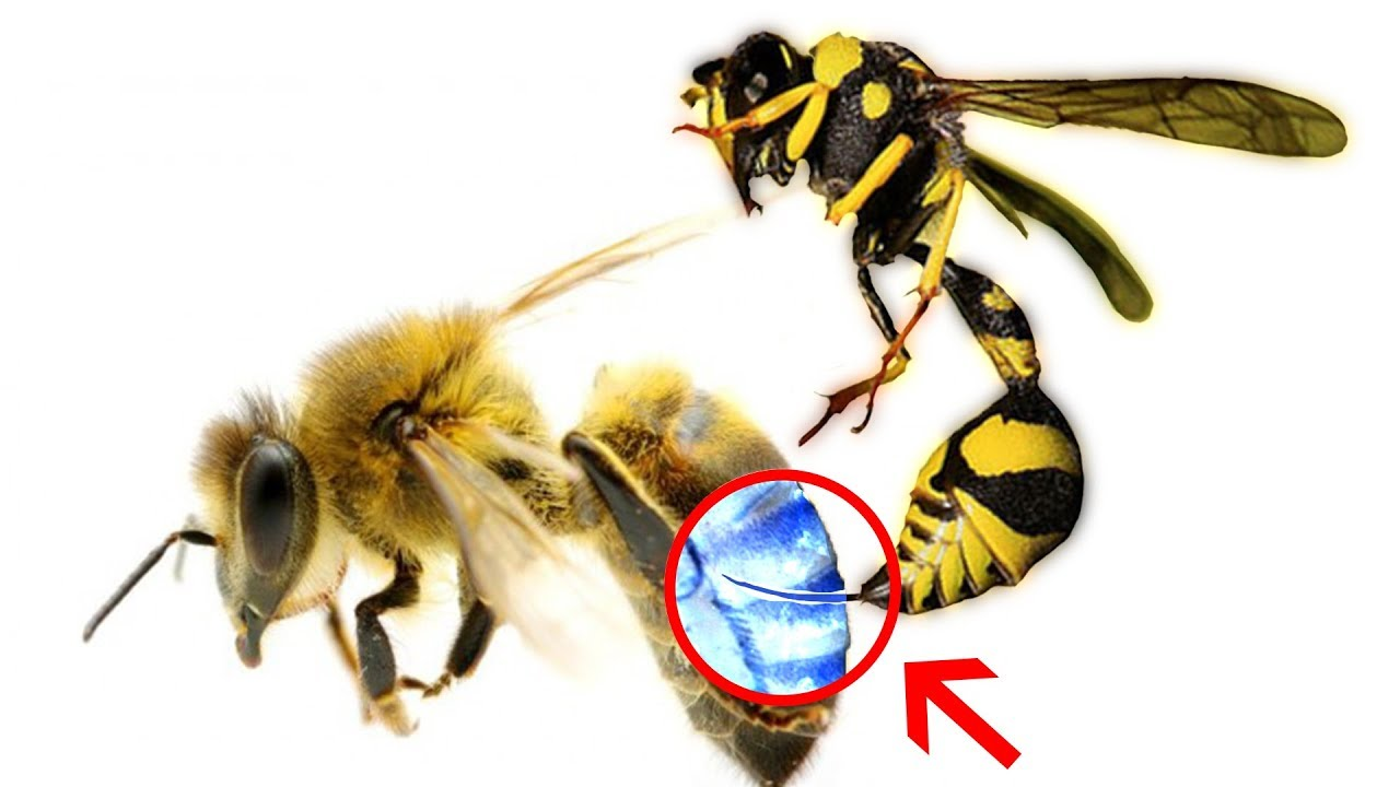The Science of Bees - Can a Bee Sting a Bee?