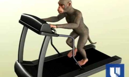 Monkey's Thoughts Makes Robot Walk