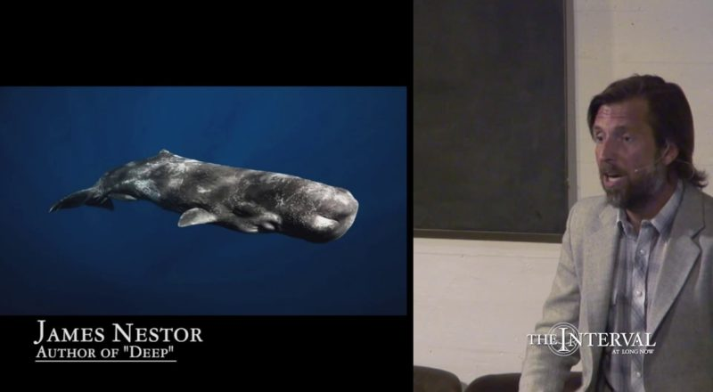 Sperm whales are the loudest animal on the planet