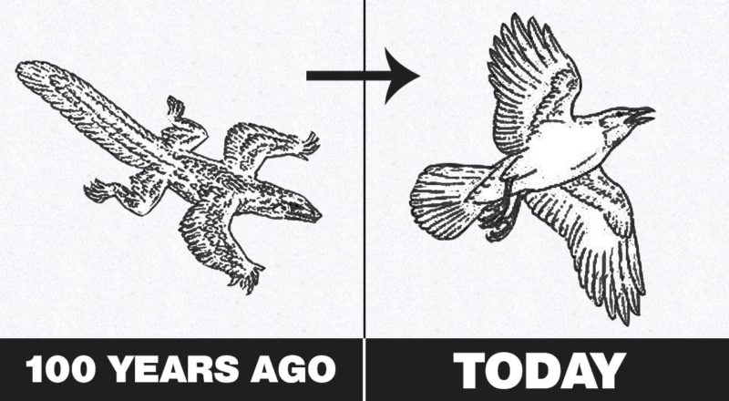 10 Crazy Ways Animals Evolved Over The Last 100 Years