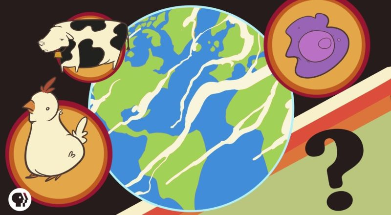 Which Life Form Really Dominates Earth?