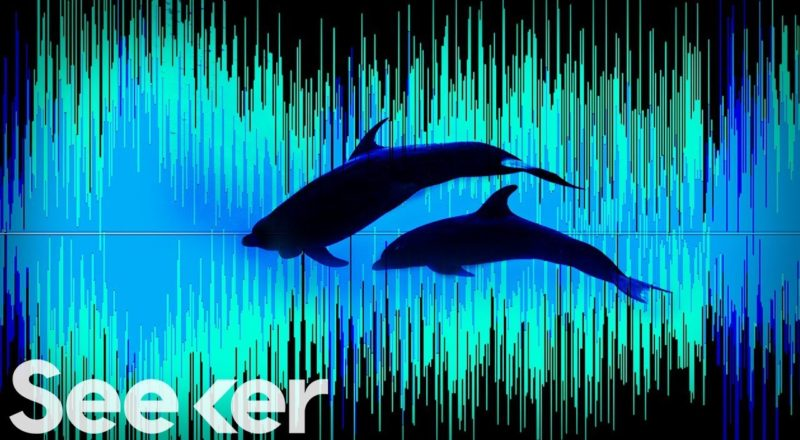 Artificial Intelligence Is Mapping the Pacific Ocean's Secret Soundscape