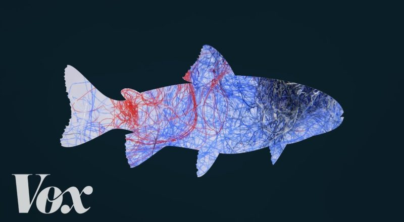How plastic from clothing gets into seafood