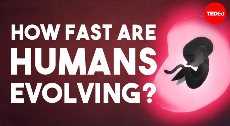 Is human evolution speeding up or slowing down?
