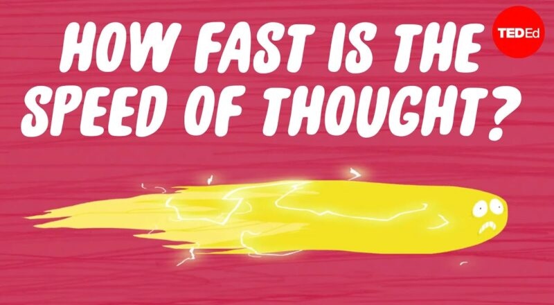 How fast is the speed of thought?
